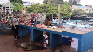 marché-poissons-galapagos