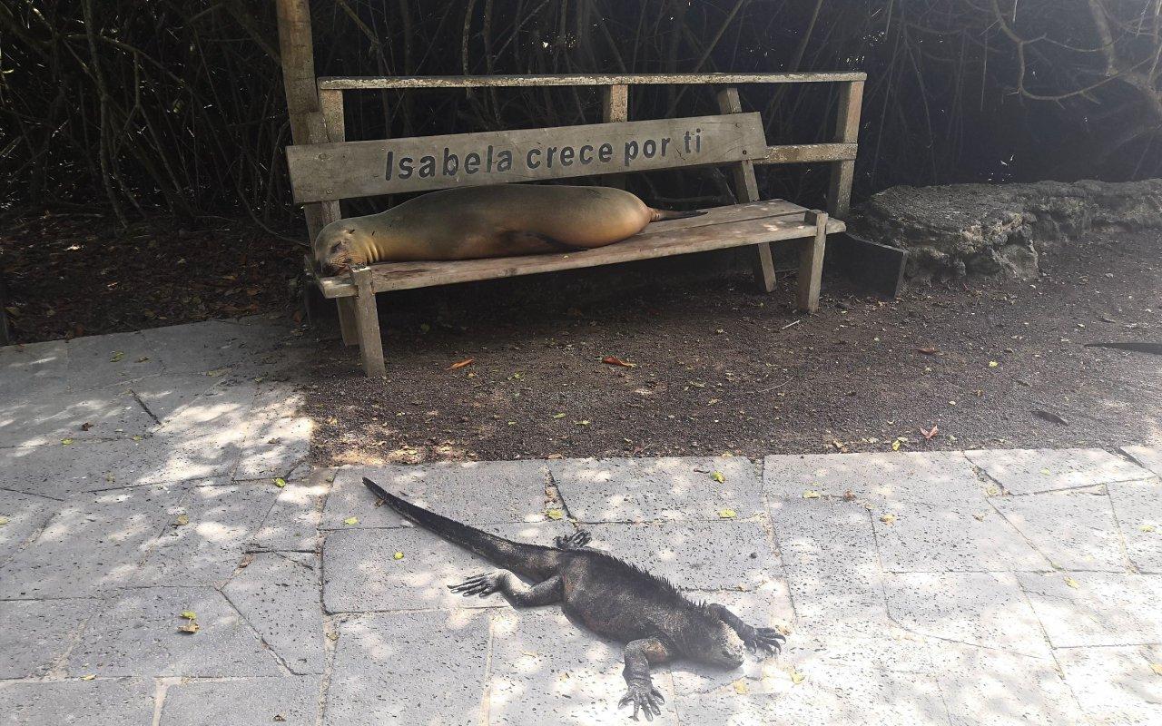 animaux-galapagos