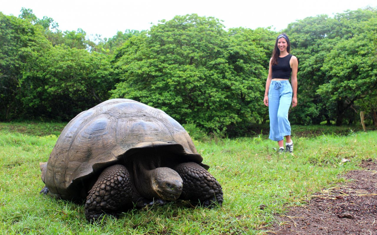 tortue-geante-galapagos