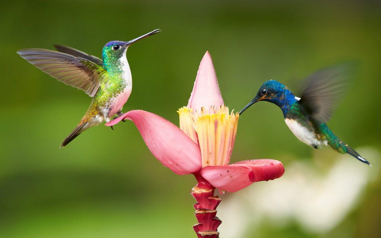 Les oiseaux d'Equateur