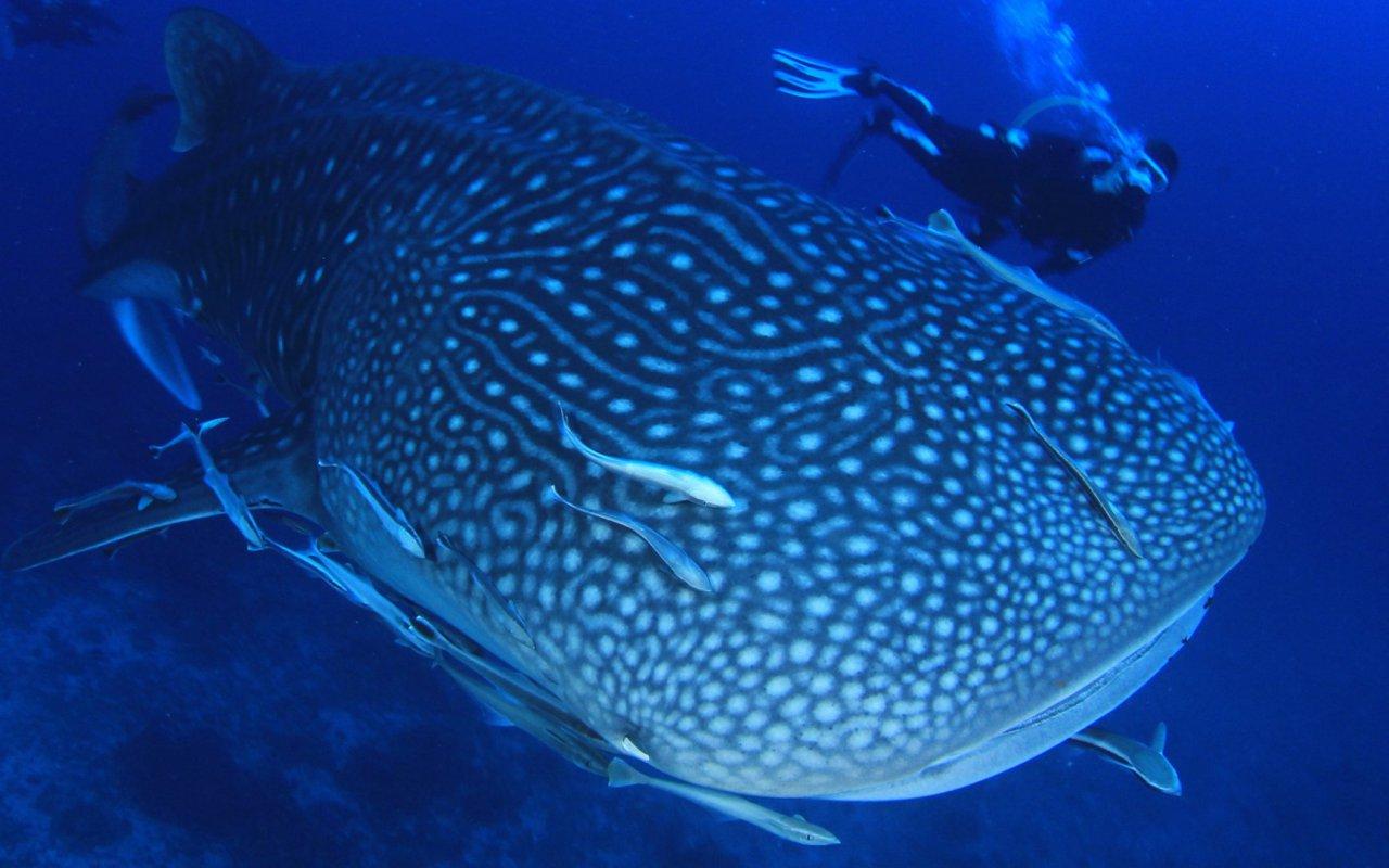 Baleine des galapagos