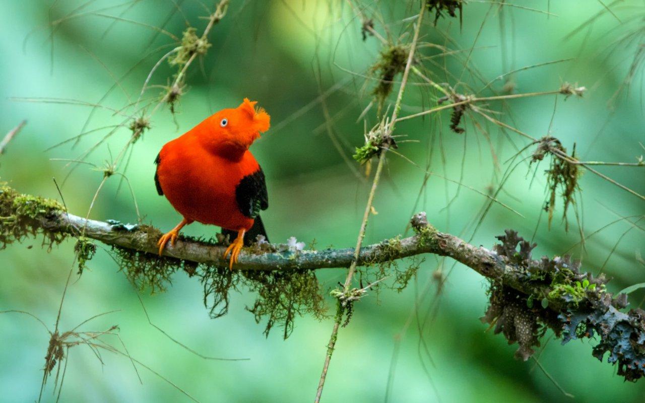 Oiseau de l'Equateur