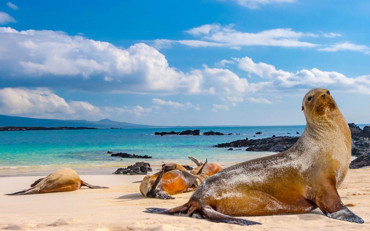 Iles des Galapagos