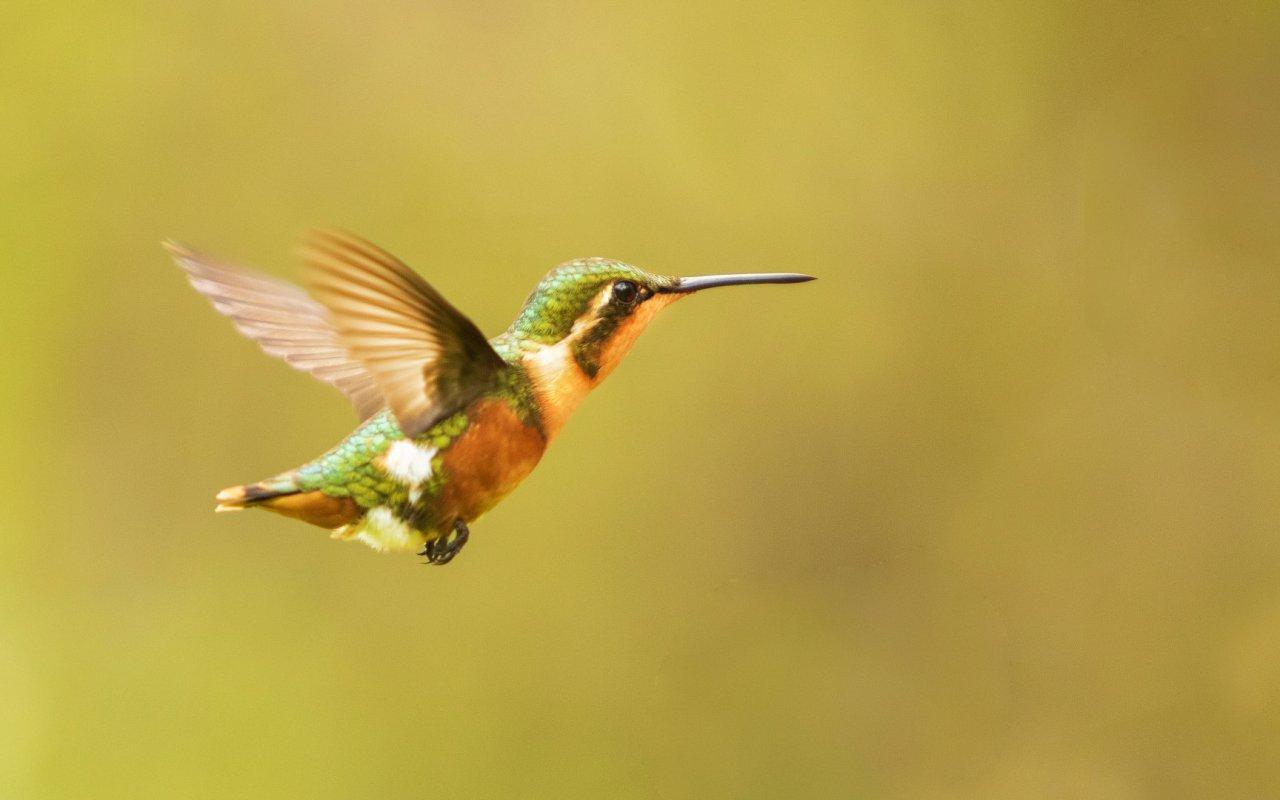 Oiseau Equateur - photos equateur