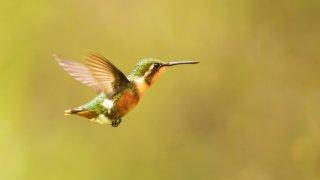 Les oiseaux de l'Equateur