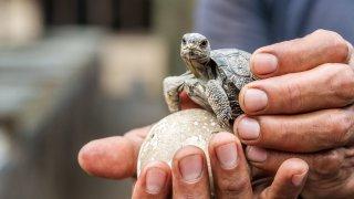 isabela galapagos tortue - terra ecuador