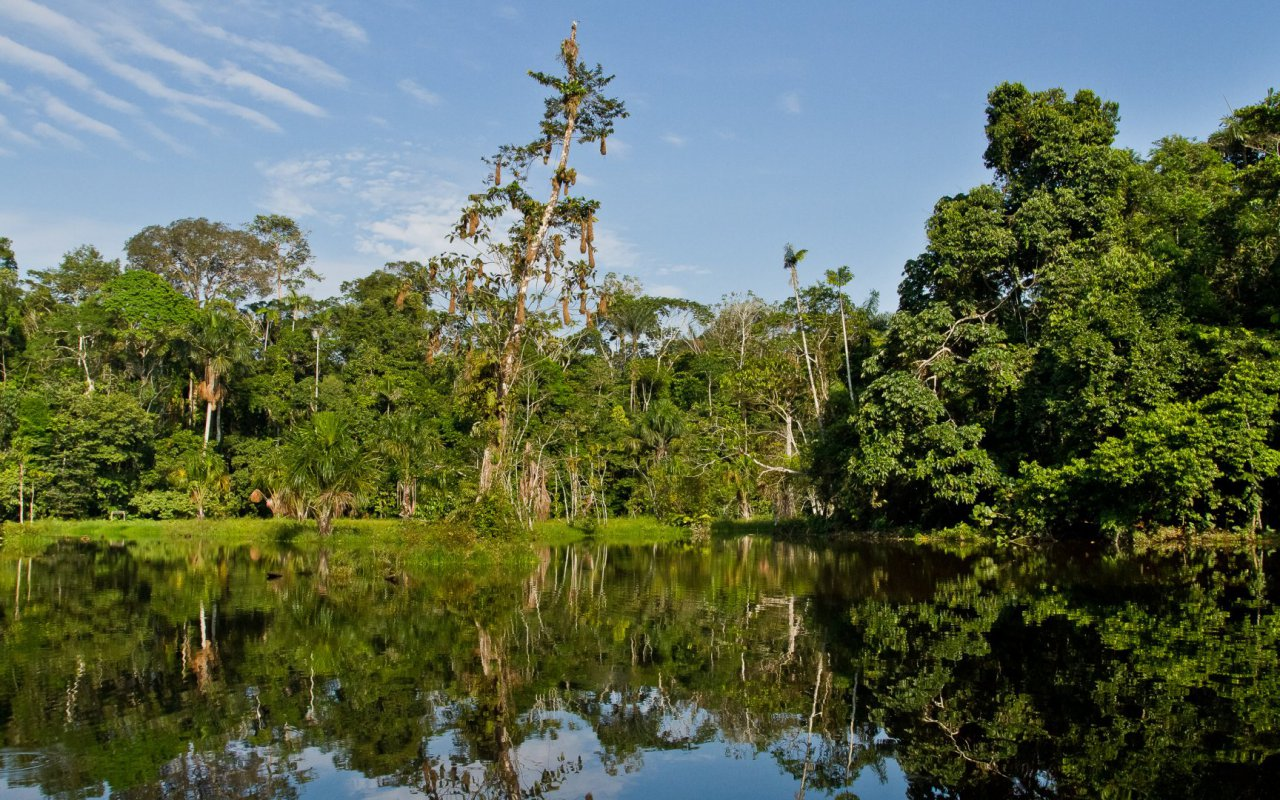 Parc national Yasuni en Equateur