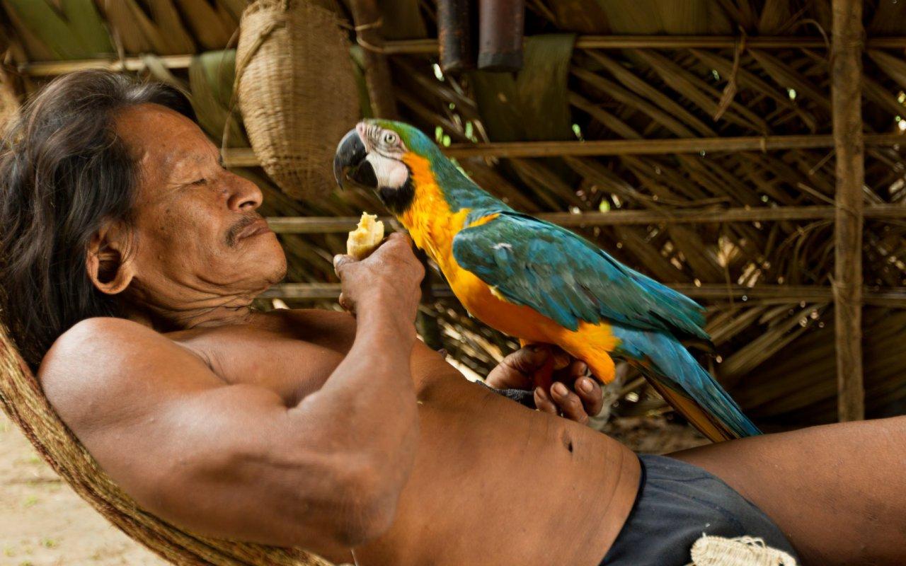 Waorani et son perroquet en Amazonie équatorienne - peuples equateur