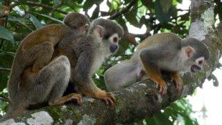 amazonie singes - voyage equateur