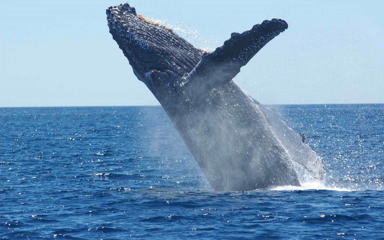 baleine-bosses-costa