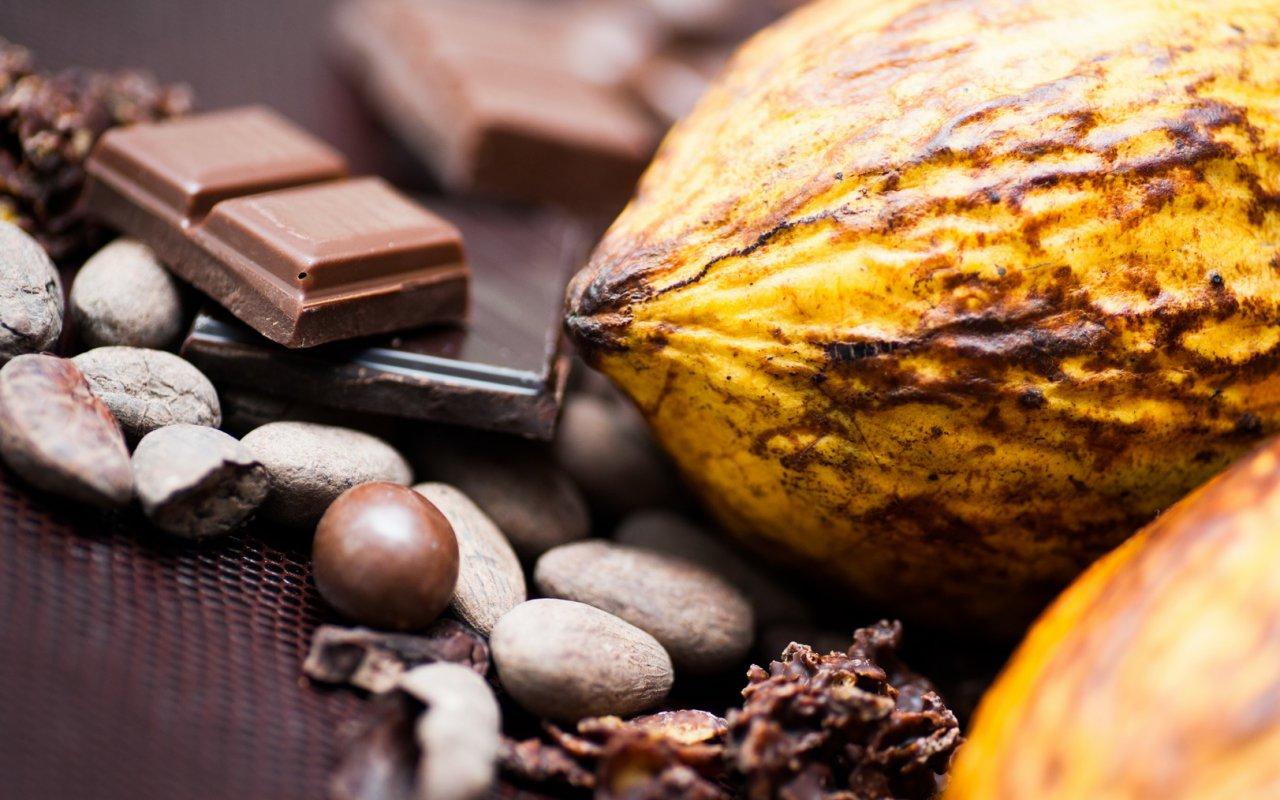 cacao equateur - voyages terra ecuador