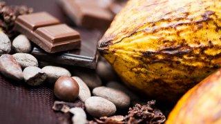 Le cacao, patrimoine équatorien