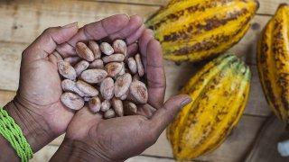 La Route du Cacao