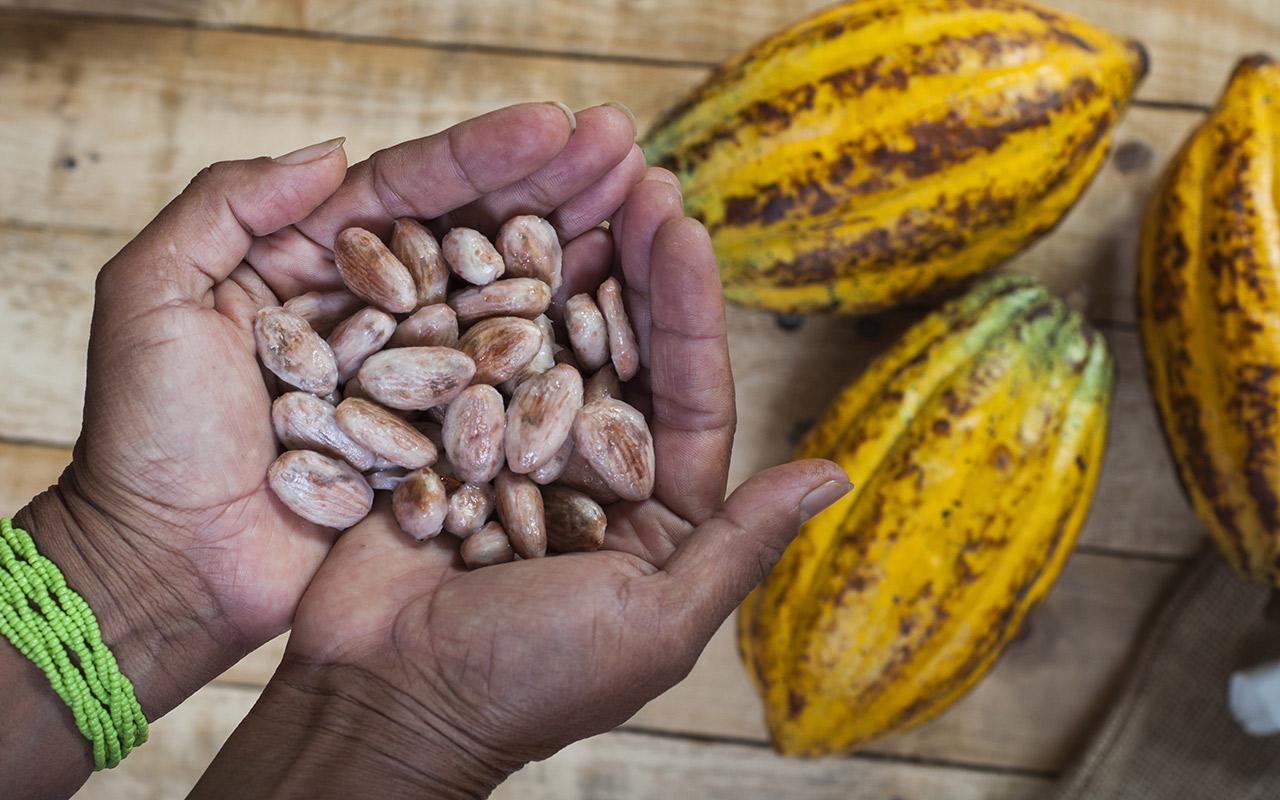 route du cacao equateur - terra ecuador