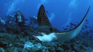 Réserve marine des Galapagos