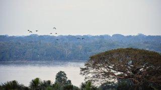 envol-oiseaux-amazonie