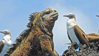 séjour galapagos - terra ecuador