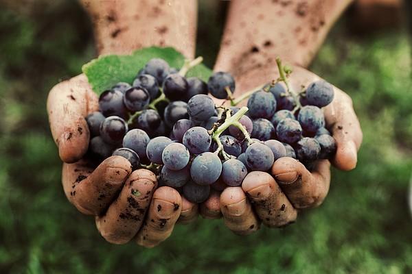 raisins-vin-equateur
