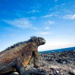 circuits galapagos - terra ecuador agence locale francophone