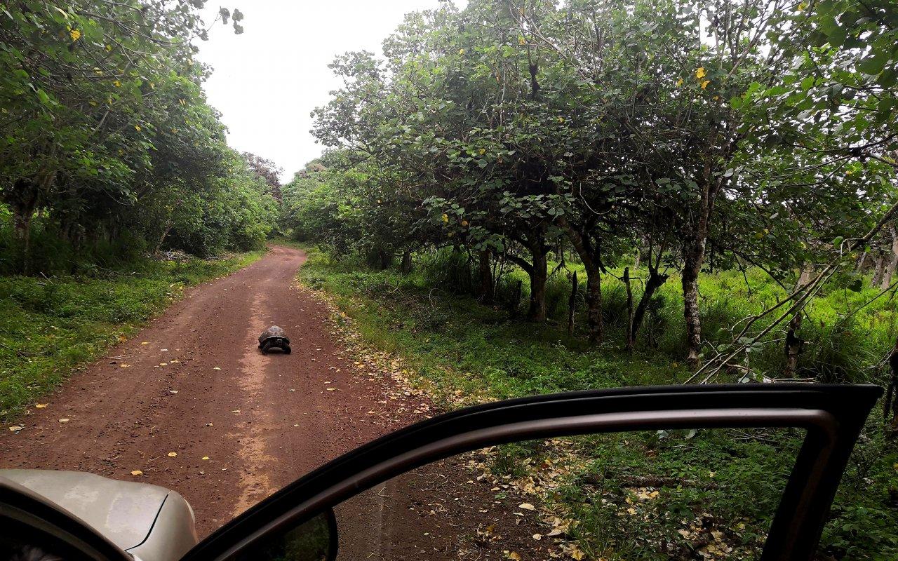 safari-galapagos