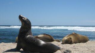 lions de mer - séjour de luxe en equateur