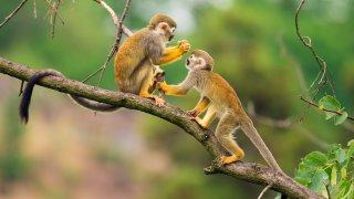 Les singes en Equateur
