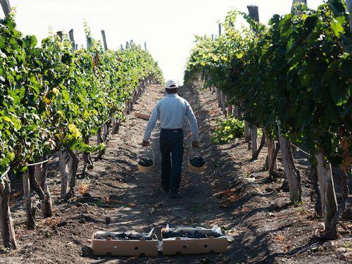 vignes-equateur-vin
