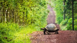 tortue equateur - terra ecuador