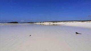 La plus belle plage c'est Tortuga Bay aux Galápagos