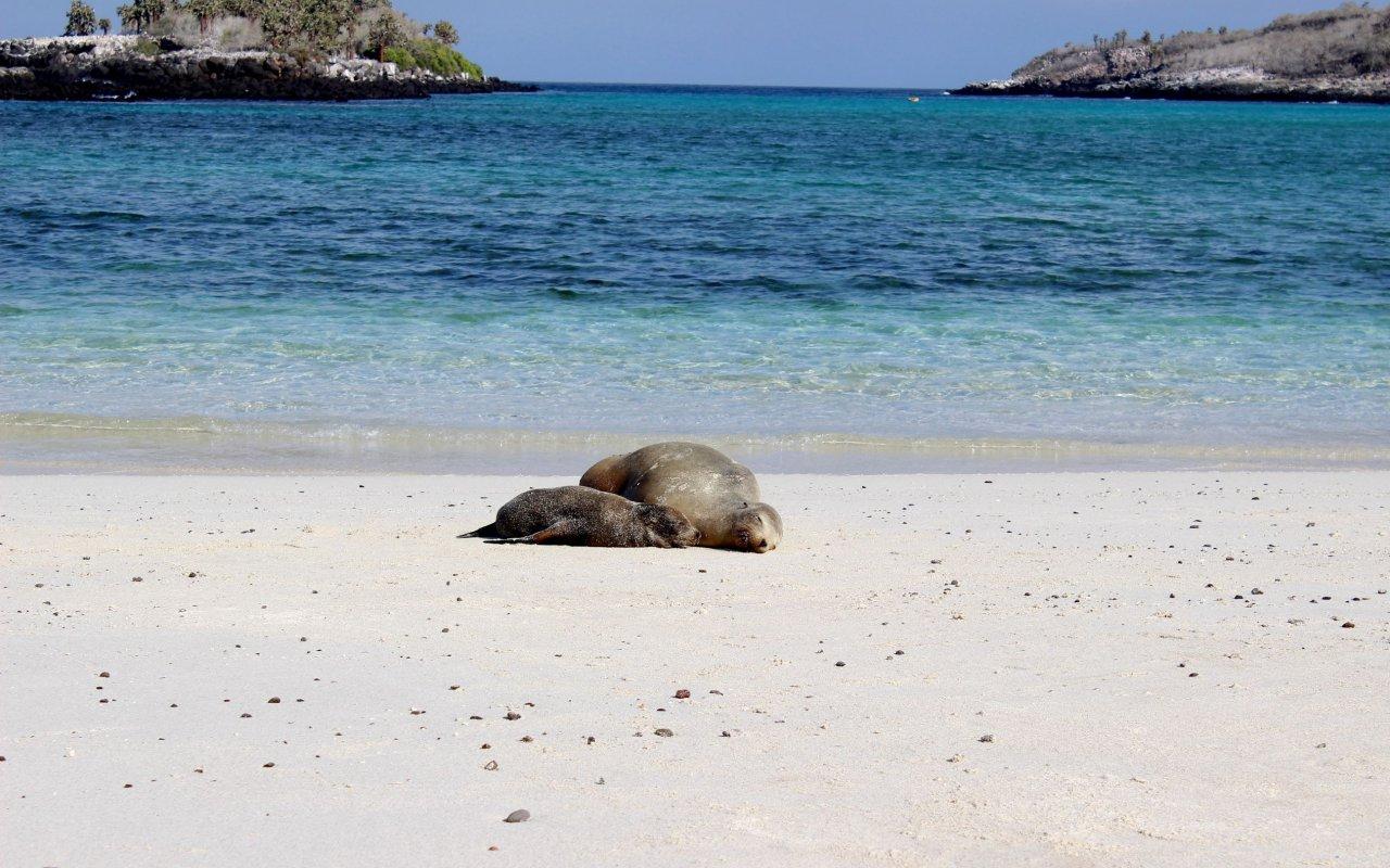 otaries-galapagos